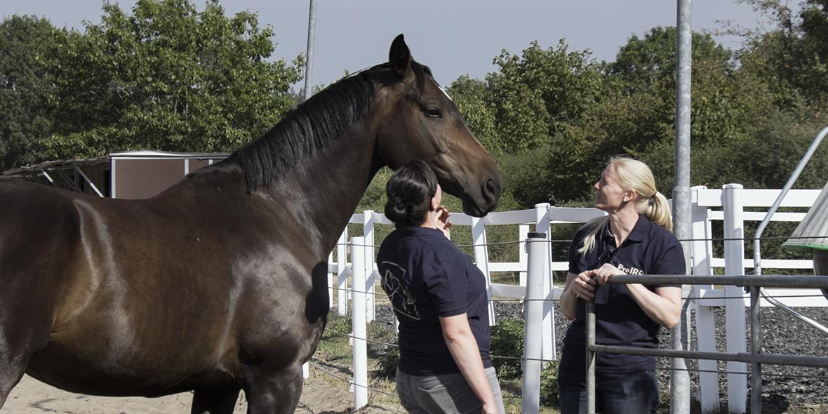 Pro IRA e.V. Reiten Team Pferde Inklusiv Inklusion