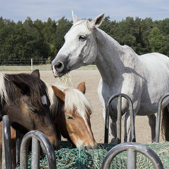 Pro IRA e.V. Inklusives Reiten Pferde Hof Berlin Koppel