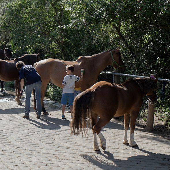 Pro Ira e.V. inklusives Reiten Berlin Pferde putzen striegeln absatteln Angebot individuell